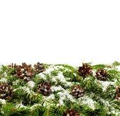 Weihnachten hintergrund. eva rahmen — Stockfoto