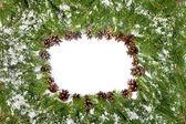 Christmas background. Eve framework — Стоковое фото