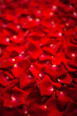 Background of red rose petals — Stock Photo