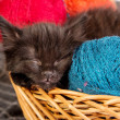 Black kitten playing with a red ball of yarn on white background - Stock Photo