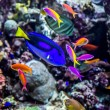 Aquarium tropical fish on a coral reef - Stock Photo