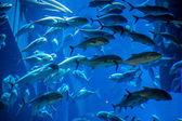 Aquarium tropical fish on a coral reef — Stock Photo