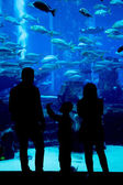Huge aquarium in a hotel Atlantis in Dubai on the Palm islands — Stock Photo