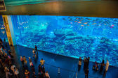 Largest aquarium of the world in Dubai Mall — Stock Photo
