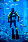 Huge aquarium in Dubai. Diver feeding fishes. — Stock Photo
