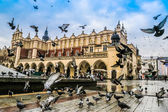 A lot of doves in Krakow old city. — Stock Photo