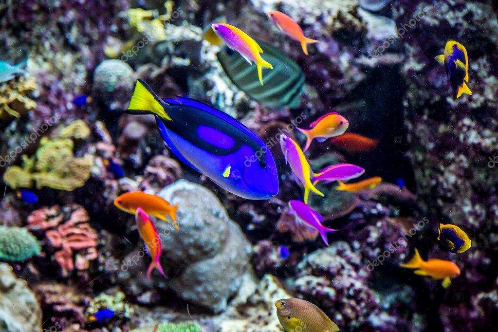 Poissons d 39 aquarium tropical sur un r cif de corail for Poisson tropicaux aquarium
