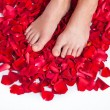 Healthy Woman's Legs and Rose Petals over white. — Stock Photo