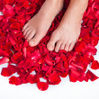 Healthy Woman's Legs and Rose Petals over white. — Stock fotografie
