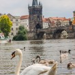 Royalty-Free Stock Photo: Prague. Charles Bridge in Prague  Czech Republic