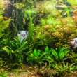 Freshwater aquarium with fish pterophyllum scalare — Stock Photo