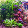 Ttropical freshwater aquarium with fishes — Stock Photo #26062747