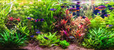 Ttropical aquário de água doce com peixes — Foto Stock
