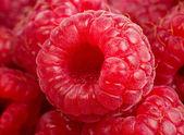 Ripe rasberry background. Close up macro shot of raspberries — Stock Photo