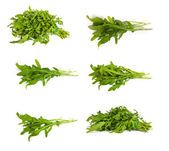 Set of Arugula-rucola fresh heap leaf on white — Stock Photo