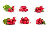 Set of bunch of fresh radishes isolated on white — Stock Photo