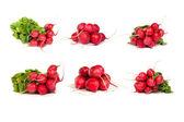 Set of bunch of fresh radishes isolated on white — Stock Photo