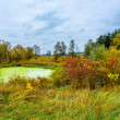 Forest lake in fall. Panorama — Photo