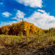 Autumn forest panorama — Stock Photo