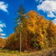 Autumn forest panorama — Stock Photo #33311785