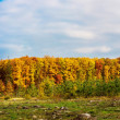panorama de forêt automne — Photo