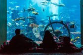 Huge aquarium in a hotel Atlantis in Dubai — Stok fotoğraf