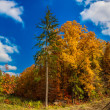 Autumn forest panorama — Stock Photo #35289275