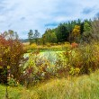 Forest lake in fall. Panorama — ストック写真
