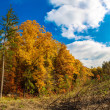 Autumn forest panorama — Stock Photo #35289913