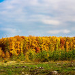 Autumn forest panorama — Stock Photo #35291067