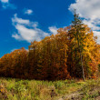 Autumn forest panorama — Stock Photo #35292805