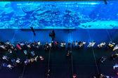 Acuario más grande del mundo en el centro comercial dubai mall — Foto de Stock