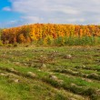 Autumn forest panorama — Stock Photo #35329019
