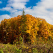 Autumn forest panorama — Stock Photo #35350367