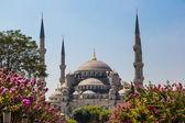 The Blue Mosque, (Sultanahmet Camii), Istanbul, Turkey — Foto Stock