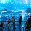 Largest aquarium of the world in Dubai Mall — Stock Photo