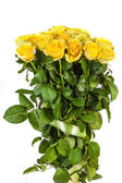 Group of fresh yellow roses — Stock Photo
