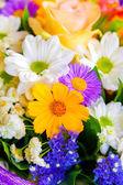 Spring flowers background on white background — Stock Photo