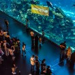 Stock Photo: Largest aquarium of world