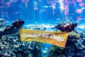 Largest aquarium of the world — Stockfoto