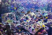 тропические рыбы — Стоковое фото