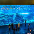Aquarium in Dubai Mall — Stok fotoğraf