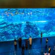 Aquarium in Dubai Mall — Stock Photo
