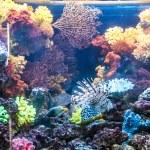 Zdjęcie ryba na rafy koralowej w Dubaj aquarium — Zdjęcie stockowe