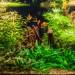 Ttropical freshwater aquarium with fishes — Stock Photo #40601347