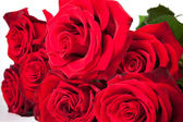 Fresh red roses — Stock Photo