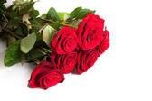 Frische rote rosen — Stockfoto