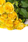 Group of fresh yellow roses — Стоковое фото