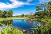 Panorama of summer morning lake — Stock Photo
