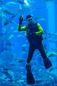 Huge aquarium in Dubai. Diver feeding fishes. — Stock Photo